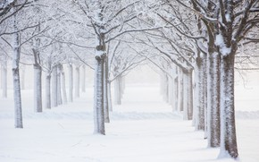Картинка зима, снег, деревья, изморозь