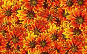 Картинка цветы, фон, много