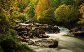 Картинка лес, природа, река, поток воды
