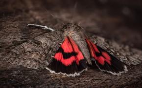 Картинка макро, фон, бабочка, насекомое, кора