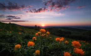 Картинка небо, солнце, облака, цветы, горы, холмы, вечер, горизонт, Россия, закт, Алтай, жарки, купальницы