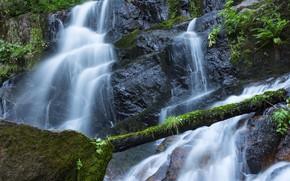 Картинка зелень, лес, камни, водопад, мох, Калифорния, США, Sequoia National Park
