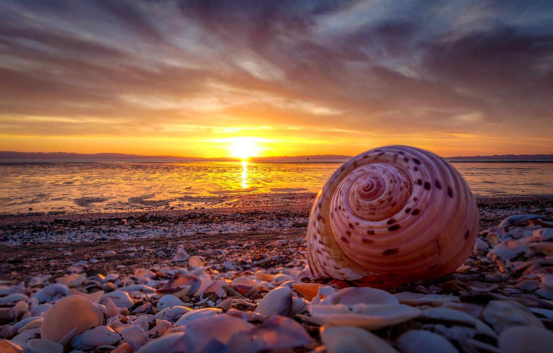 Фото обои море, пляж, небо, солнце, облака, закат, берег, побережье, красота, вечер, раковина, ракушка, прибой, ракушки
