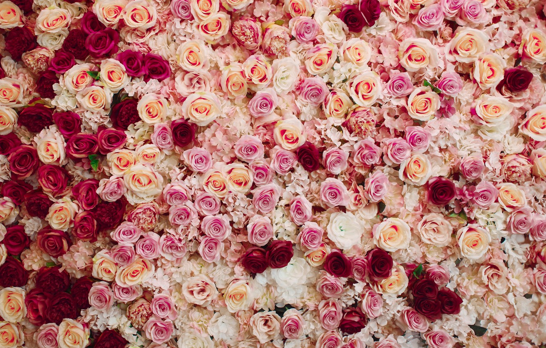 Картинки много роз фото