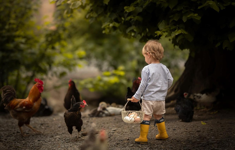 Фото обои мальчик, яица, курицы