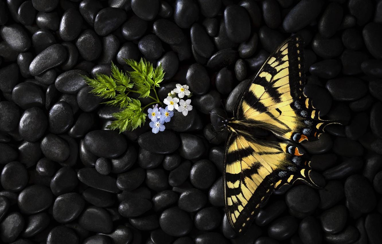 Фото обои цветы, бабочка, butterfly, flowers, Stephen Clough