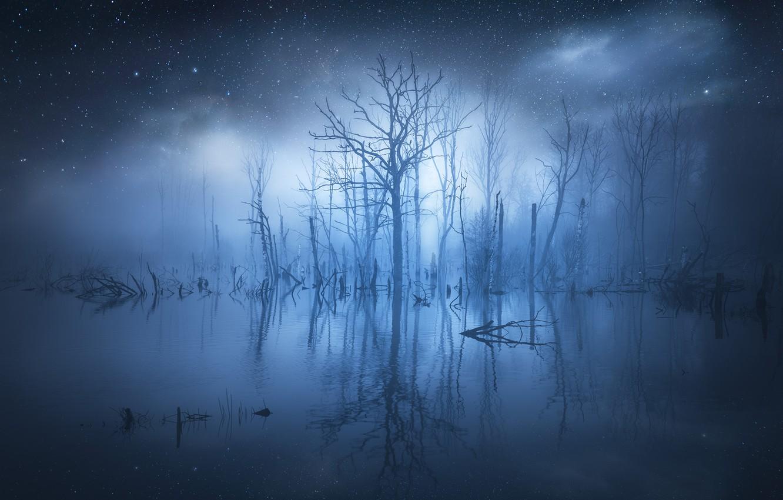 Фото обои вода, звезды, деревья, туман, отражение, свечение, trees, water, glow, stars, fog, reflection, Christian Lindsten