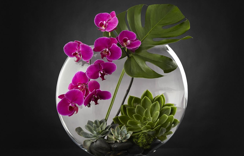 Фото обои аквариум, растения, орхидея