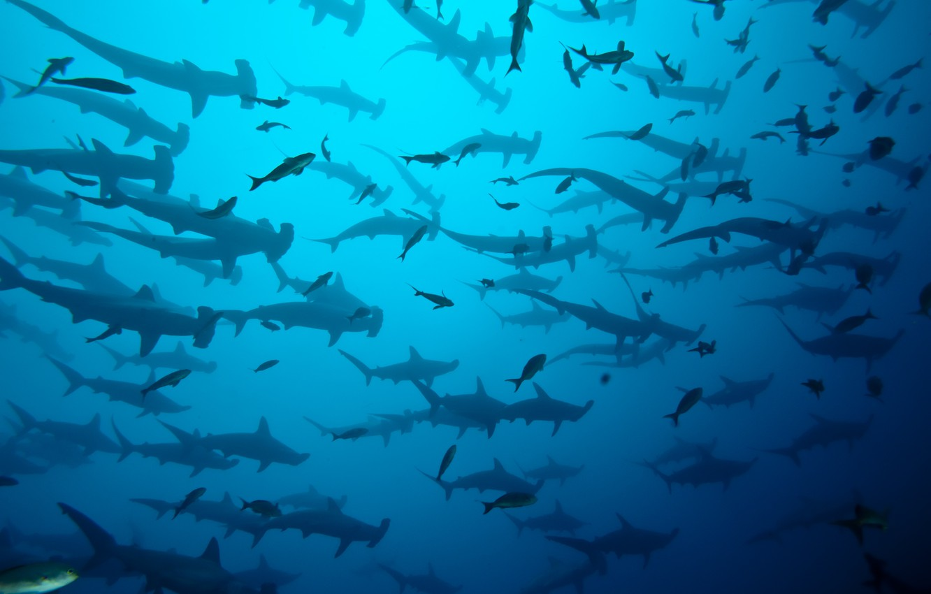 Фото обои sea, ocean, blue, costa rica, shark herd, coco island