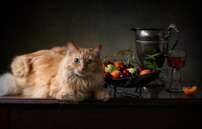 Фото обои кошка, кот, взгляд, ягоды, бокал, рыжий, кувшин, фрукты, котейка