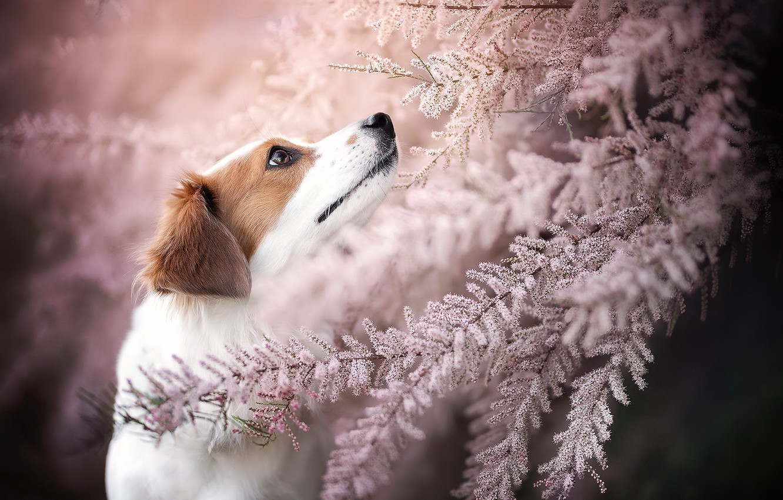 Фото обои друг, собака, весна