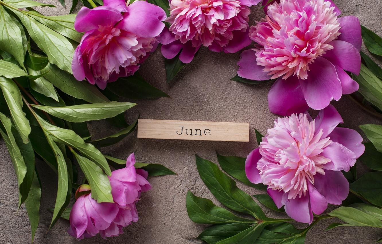 Фото обои цветы, розовые, pink, flowers, пионы, peonies
