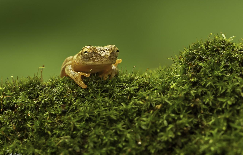 Фото обои green, grass, frog