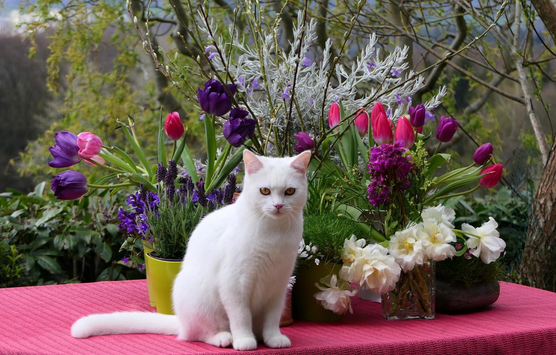 Обои цветы, Кошка. Кошки foto 18