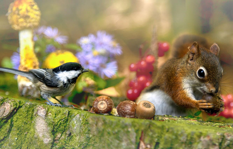Фото обои цветы, природа, ягоды, животное, птица, грибы, пень, белка, орехи, зверёк, грызун, синица
