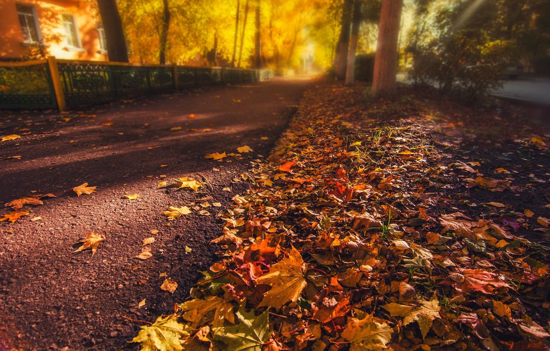 Обои желтые, асфальт, осень. Природа foto 12