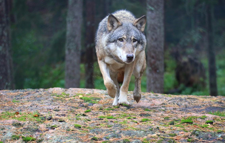 версии а волк раскачивается на одних труссиках фото единственная финалисток