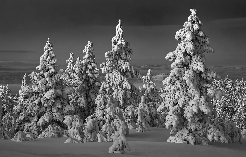 Фото обои зима, лес, снег, ночь