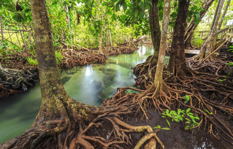 Фото обои лес, озеро, река, forest, тропический, landscape, beautiful, lake, tree, tropical, mangrove, emerald, мангровый