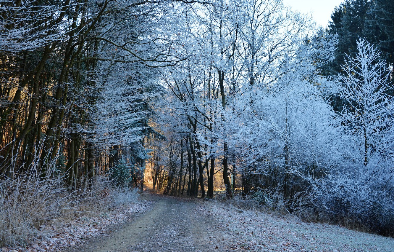 Фото обои зима, дорога, лес, деревья