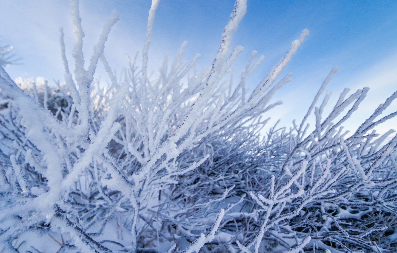 Фото обои зима, снег, деревья, пейзаж, зимний, forest, landscape, nature, beautiful, winter, snow