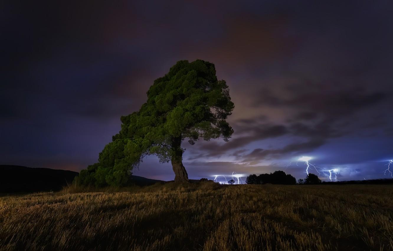 Фото обои гроза, ночь, дерево, night, tree, thunderstorm, Paco Herrero