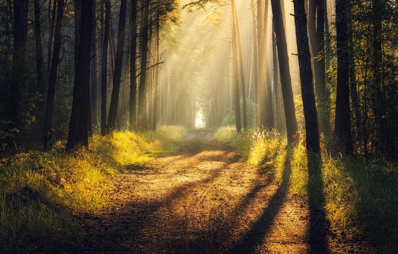 Фото обои дорога, лес, лучи, свет, тень, light, road, rays, shadow, forrest, Tomczak Michał