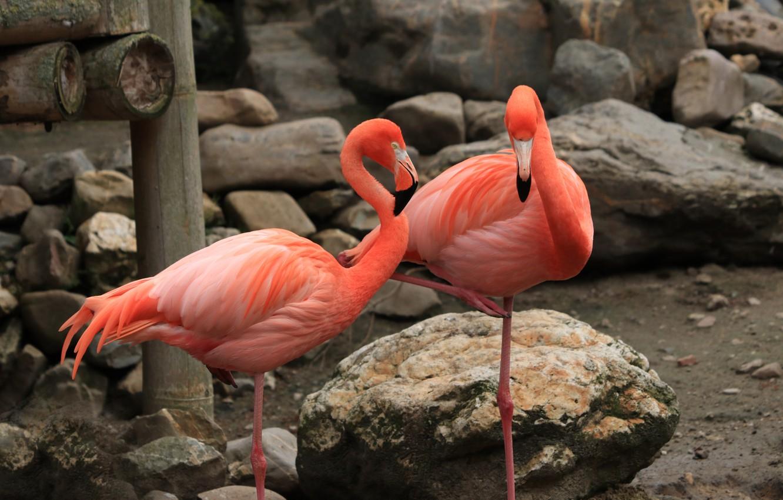 Фото обои камни, розовые, фламинго, вольер