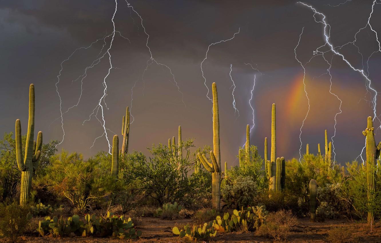 Фото обои гроза, молния, кактус, Аризона, США, Тусон, горы Тортолита