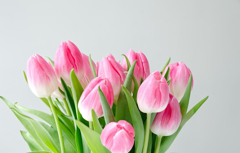 правило, нежные и красивые фото тюльпанов колокольня находятся