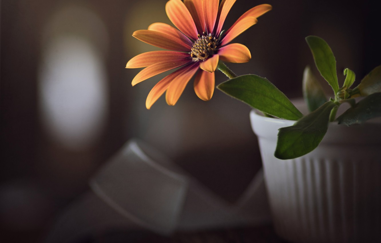 Фото обои цветок, макро, лента, горшок, доска, боке