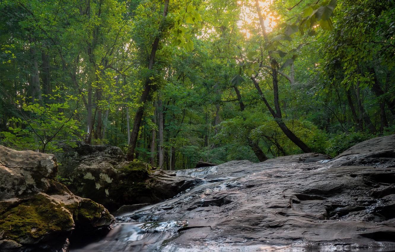 Фото обои лес, лето, деревья, природа, камни, потоки воды