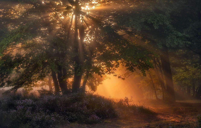 Фото обои свет, парк, утро
