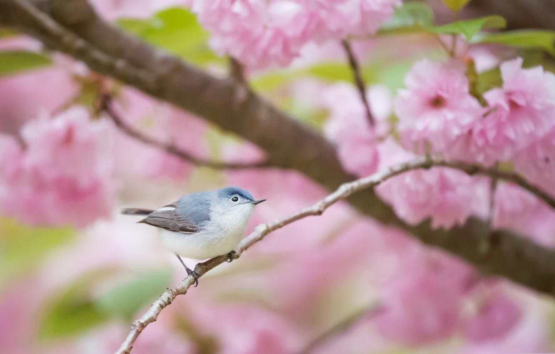 Фото обои цветы, птица, весна, сад, голубая комароловка