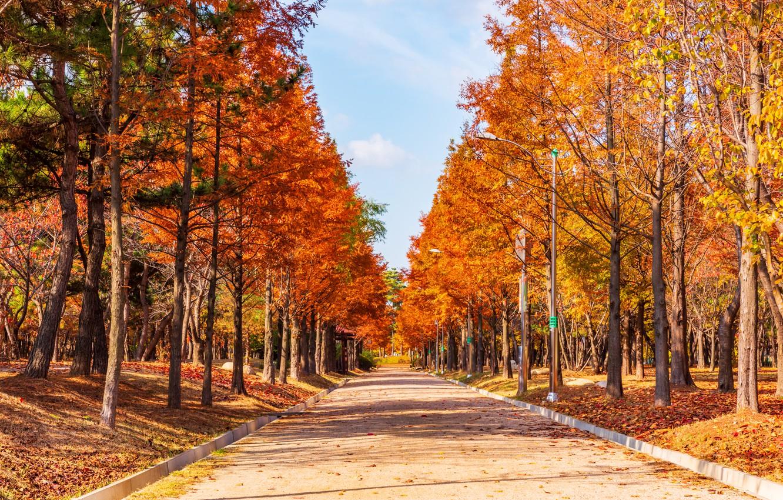 Фото обои дорога, осень, листья, деревья, парк, road, nature, park, autumn, leaves, tree