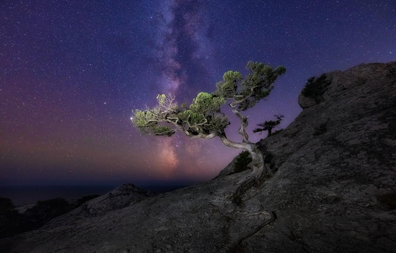 Фото обои море, пейзаж, ночь, природа, скала, дерево, звёзды, млечный путь, Крым, сосна, Новый Свет, Константин Воронов