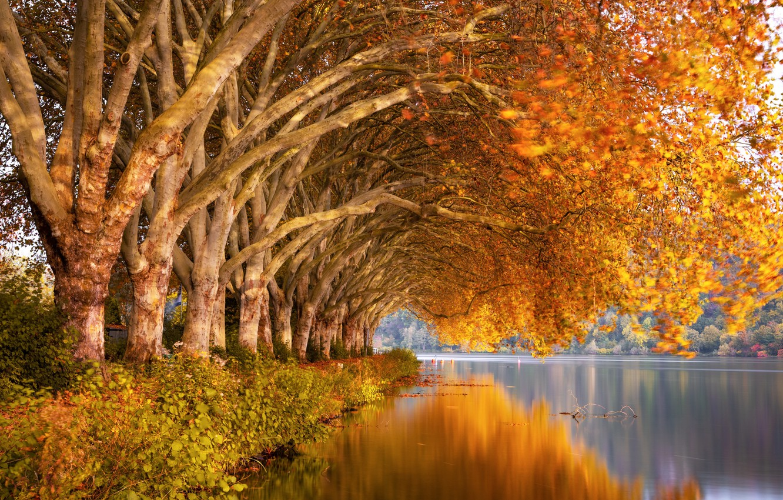 Фото обои осень, деревья, природа, река