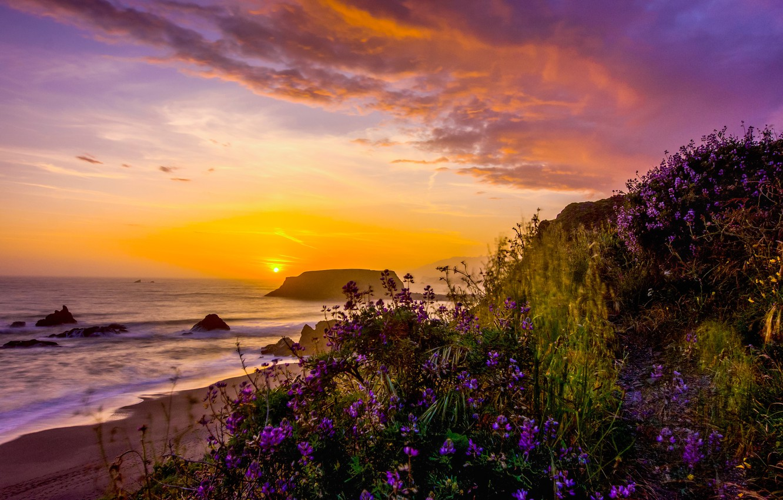 Фото обои пейзаж, закат, природа, океан, берег, растительность, США