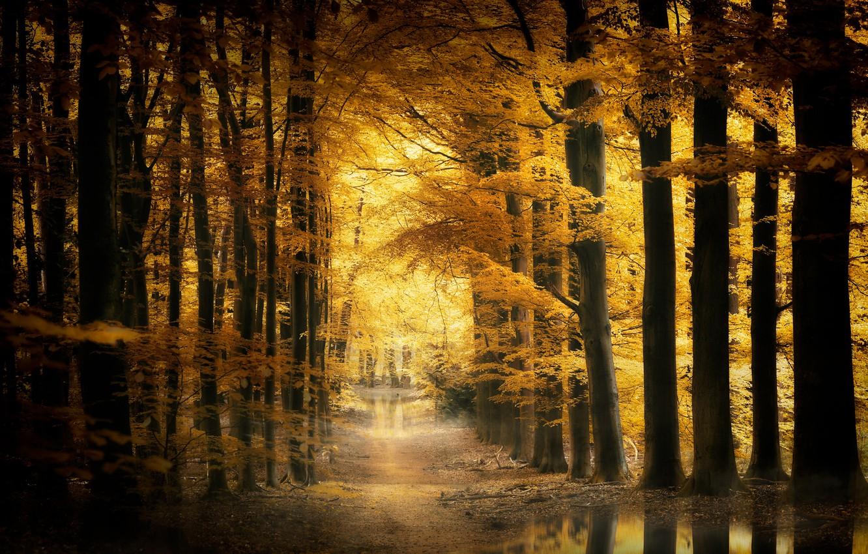 Фото обои осень, природа, парк