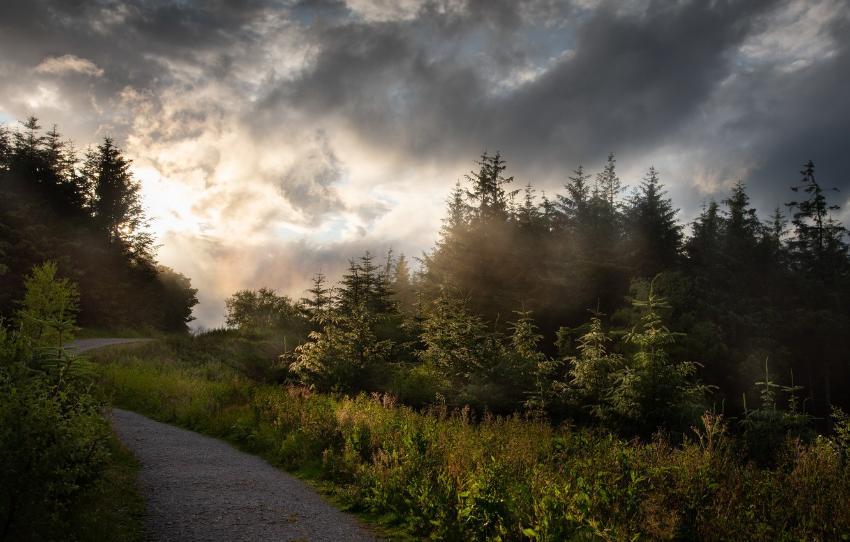 Фото обои лес, природа, туман