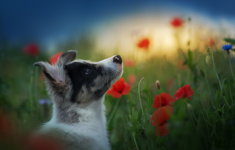 Фото обои лето, друг, собака