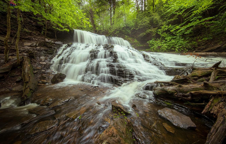 Фото обои лес, водопад, Пенсильвания, каскад, коряги, Pennsylvania, Ricketts Glen State Park, Парк штата Рикетс Глен, Mohawk …