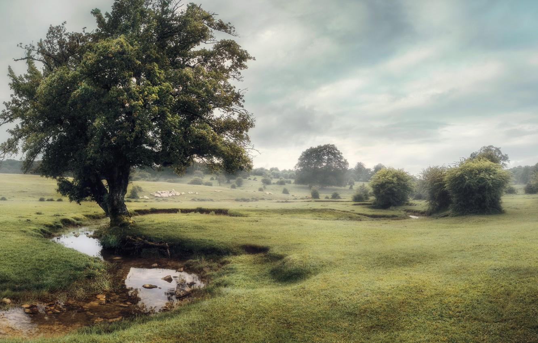 Фото обои туман, дерево, речка