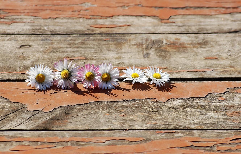 Фото обои цветы, фон, доски