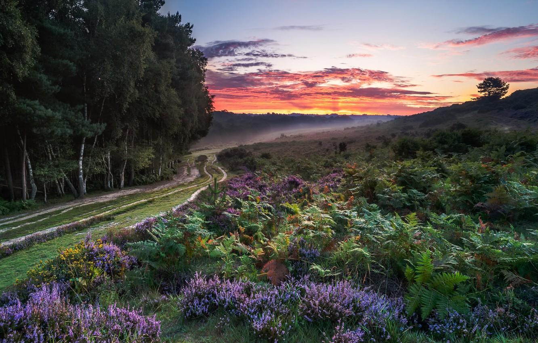 Фото обои дорога, лес, закат, природа