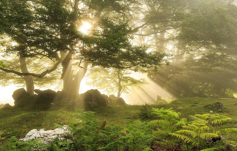 Фото обои лес, свет, природа
