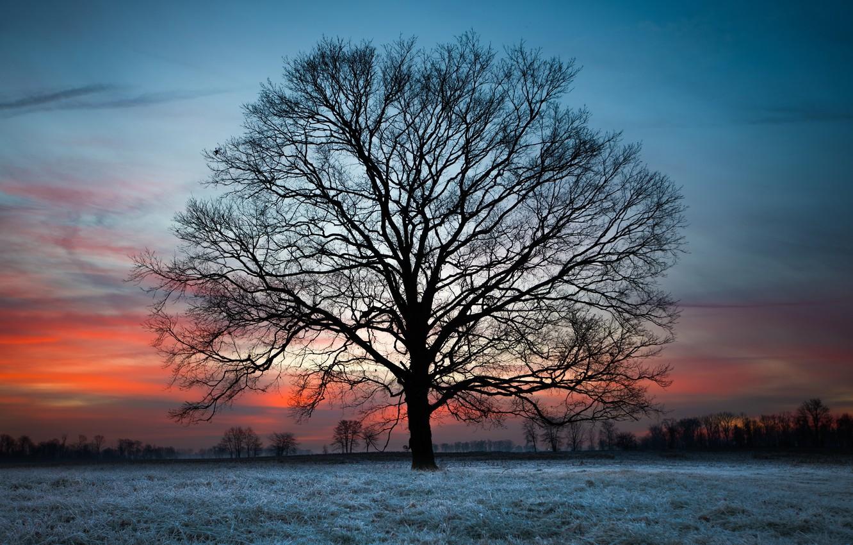 Фото обои закат, ночь, дерево