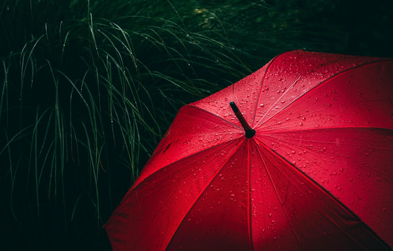 Фото обои red, grass, rain, close-up, umbrella, water, macro, blur, drops, rain drops, raining, 5k hd background