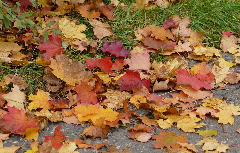 Фото обои осень, листья, colorful, клен, autumn, leaves, maple