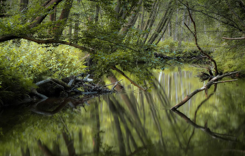 Фото обои лес, природа, река